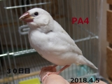 PA4~30日目