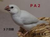 PA2生後37日目