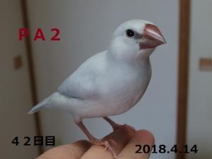 PA2命名竹千代君~里子へ