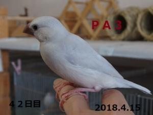 PA3幼名すのぅ君三男君~里子へ