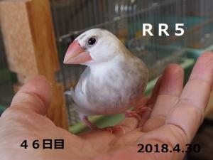 幼名ろっかちゃん46日目
