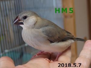 HM5 35日目