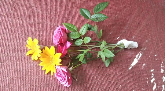献花(自宅庭の花)