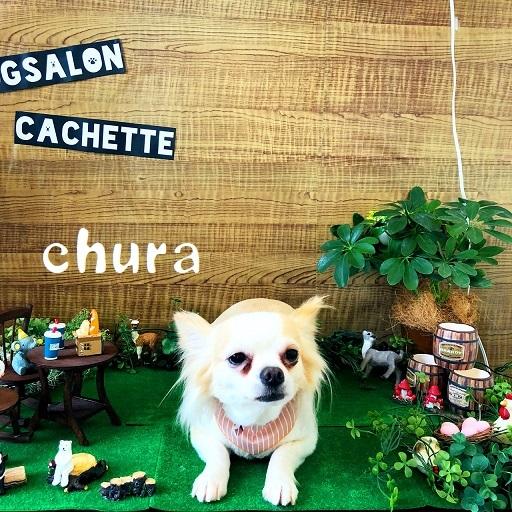 chura 石井