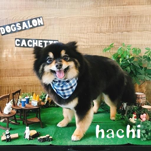 hachi 島津