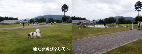 201508154.jpg