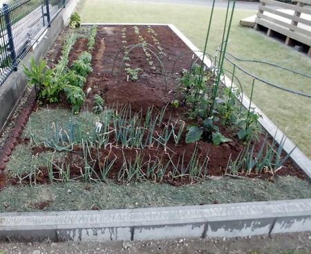 20180521菜園