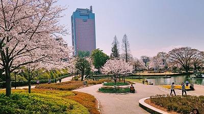 2018桜 (3)