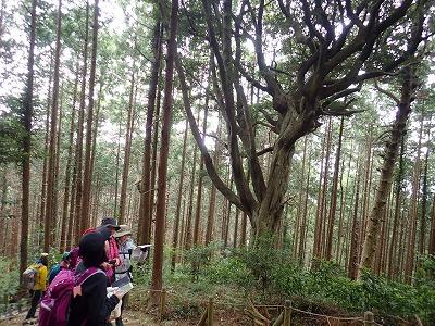 2018414筑波山 (3)