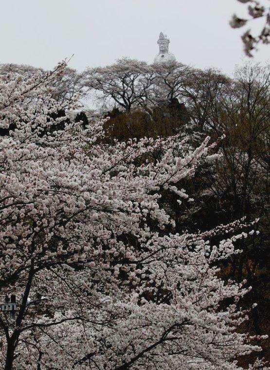 4funaoka8536.jpg