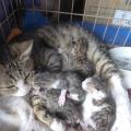 ネコの赤ちゃん誕生