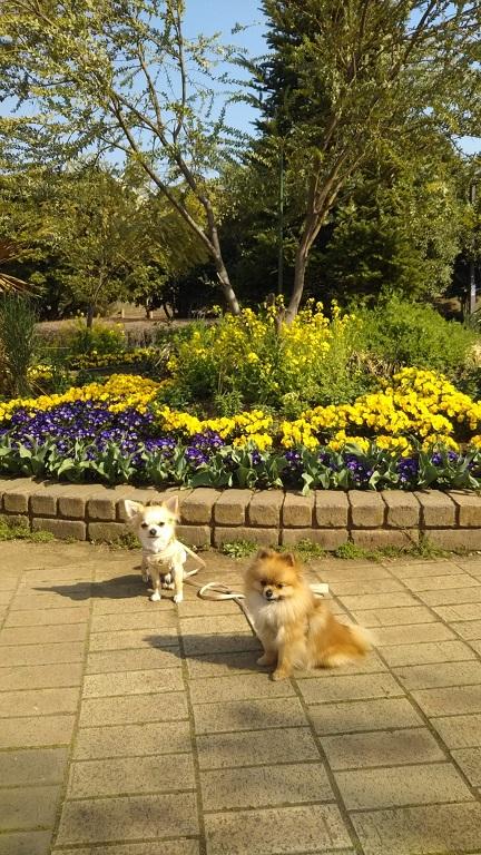 DSC_0238 小さな公園で栗吉&小豆