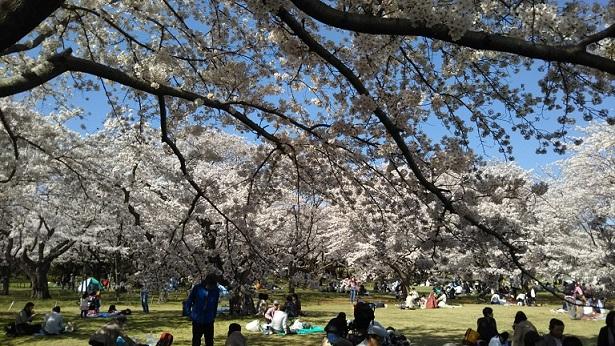 DSC_0291 昭和記念公園