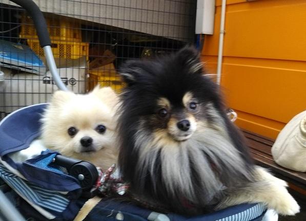 DSC_0333 ビスケちゃんとよもぎちゃん