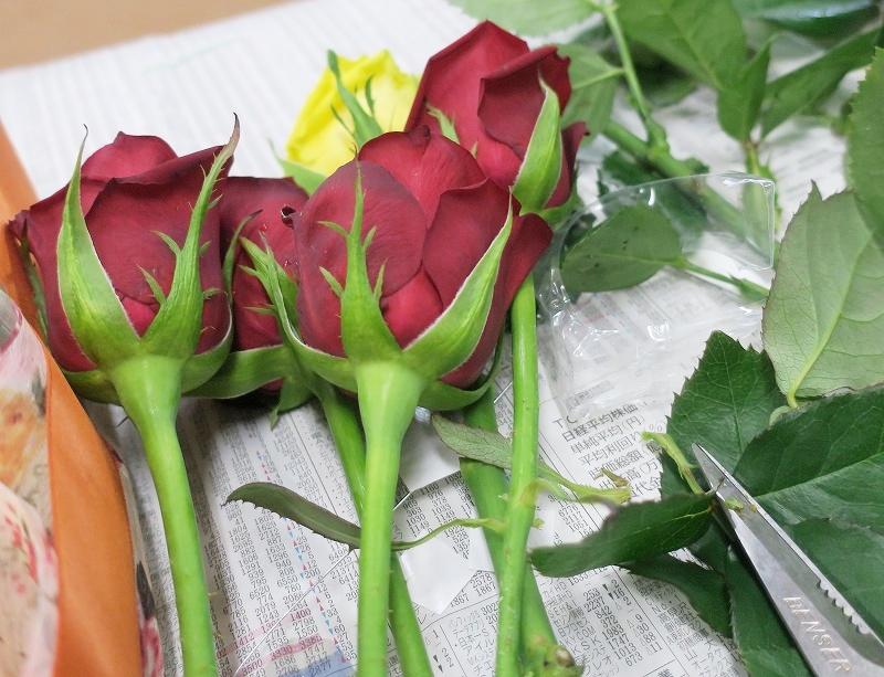 roseweek4.jpg