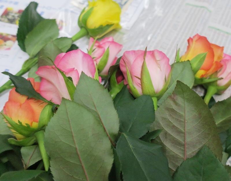 roseweek5.jpg