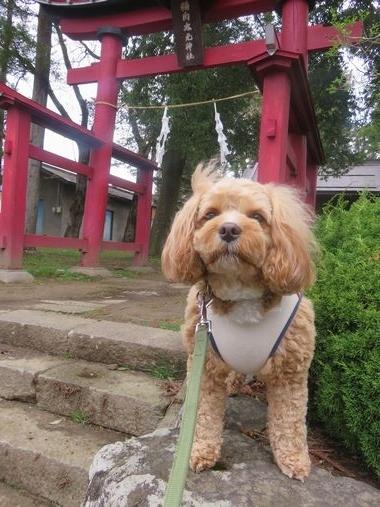 IMG_8568朝散歩
