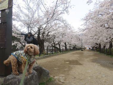 IMG_8626臥竜公園