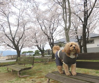 IMG_8730バラ公園