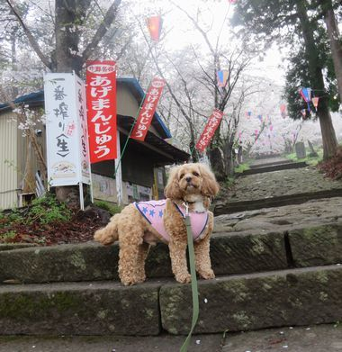 IMG_8783桜めぐり