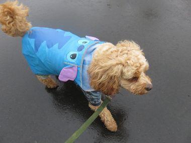 IMG_8875小雨散歩