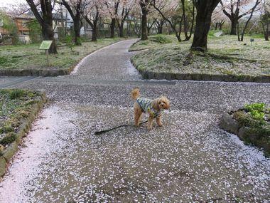 IMG_8882バラ公園