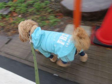IMG_8945雨散歩