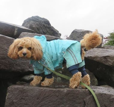 IMG_8947雨散歩