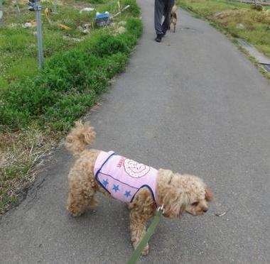 IMG_9241朝散歩