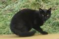 IMG_9576黒猫