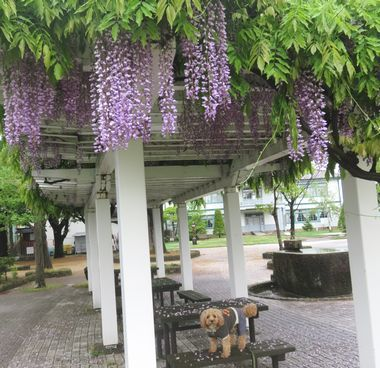 IMG_9791雨上がり散歩