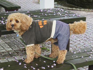 IMG_9795雨上がり散歩