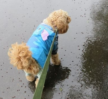 IMG_9849雨散歩