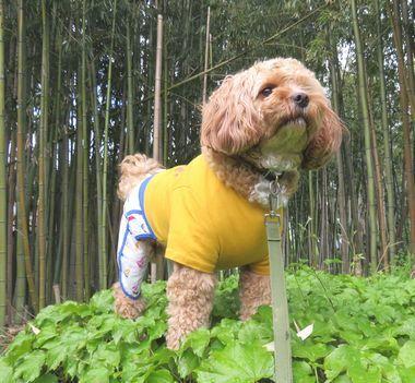 IMG_9866朝散歩