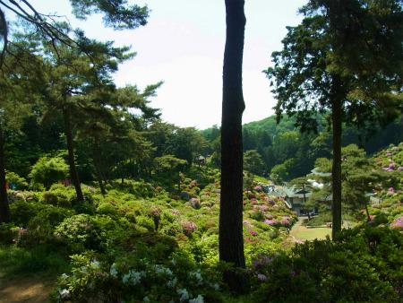 syukusyo-RIMG1526.jpg