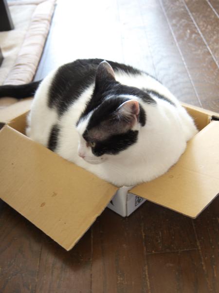 なな箱好き