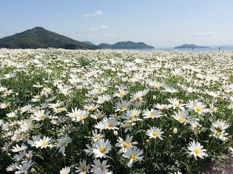 furashima5.jpg