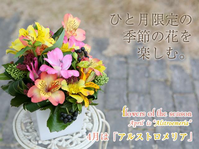 4月の花 オススメ 花束 アレンジ サプライズ 誕生日 プロポーズ 青い花