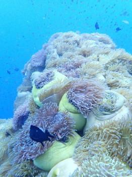 ファンダイブ、水中画像、タオ島