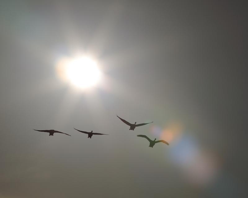 白鳥 42840001