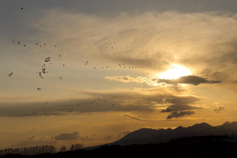夕焼けの中の雁  43300001