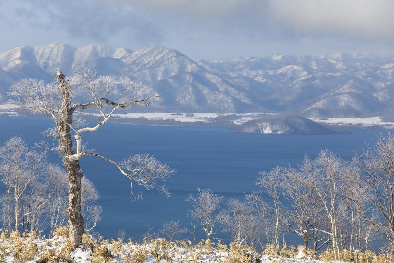 湖面に映える霧氷の木45470001