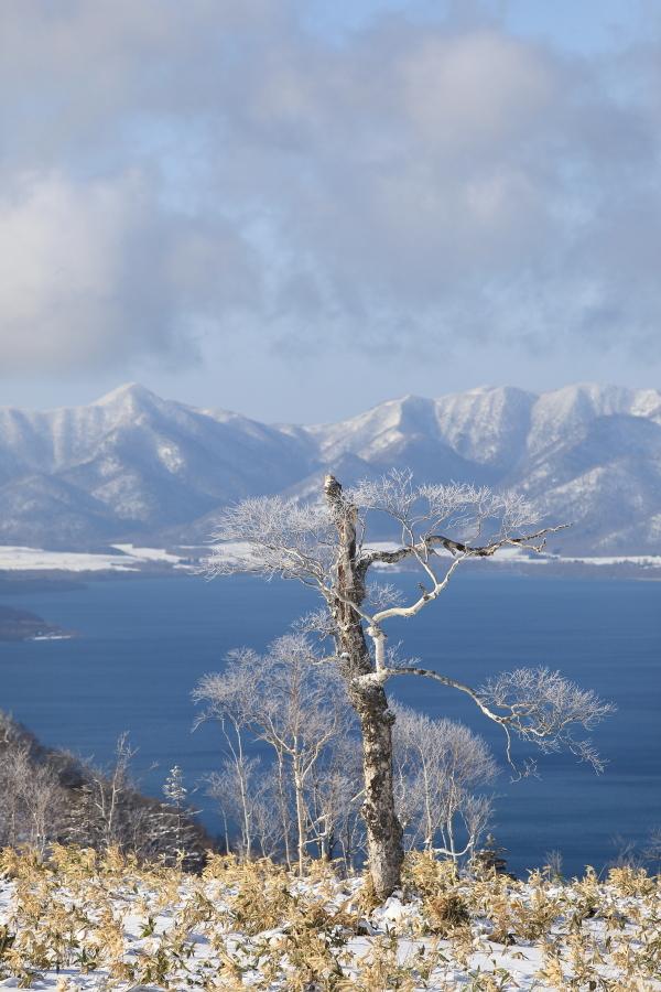 湖面に映える木々  45390001