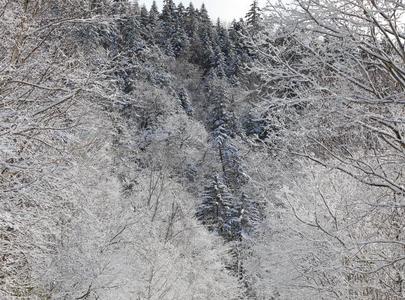 美しい木々 45550001