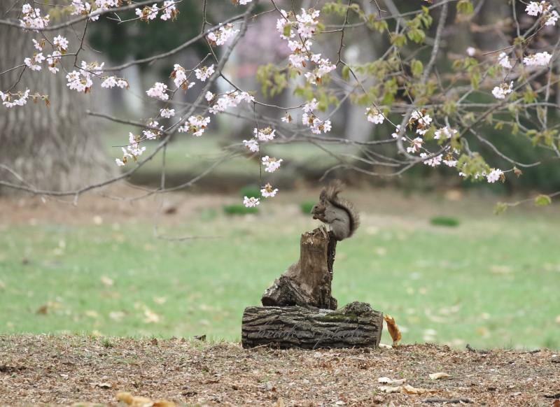 桜と蘭ちゃん 50500001署名入りedited