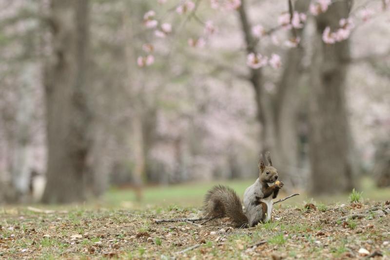 桜と蘭ちゃん 57450001署名入りedited