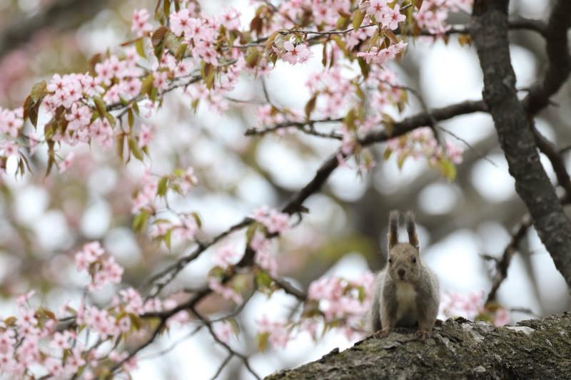 桜と蘭ちゃん 57500001署名入りedited
