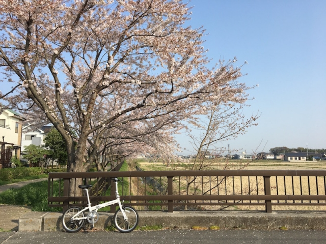 sakurayoshikawaesr.jpg