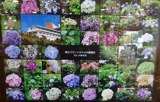 DSC0194018.jpg