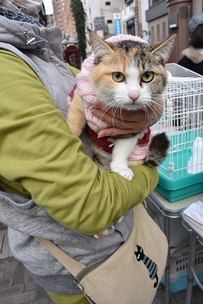 ご高齢の方が保護した猫さんのお届け